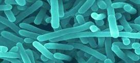 Combata los brotes de Listeria con HPP